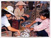Vietnam Fish Market