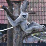 monkey-3586895_1920